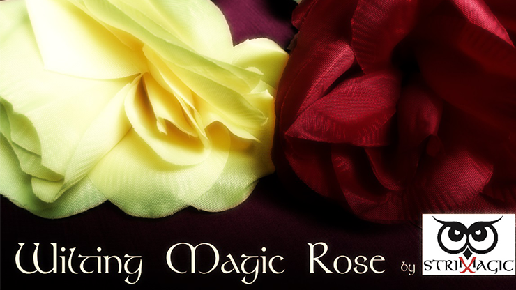 Wilting Rose by Strixmagic Trick